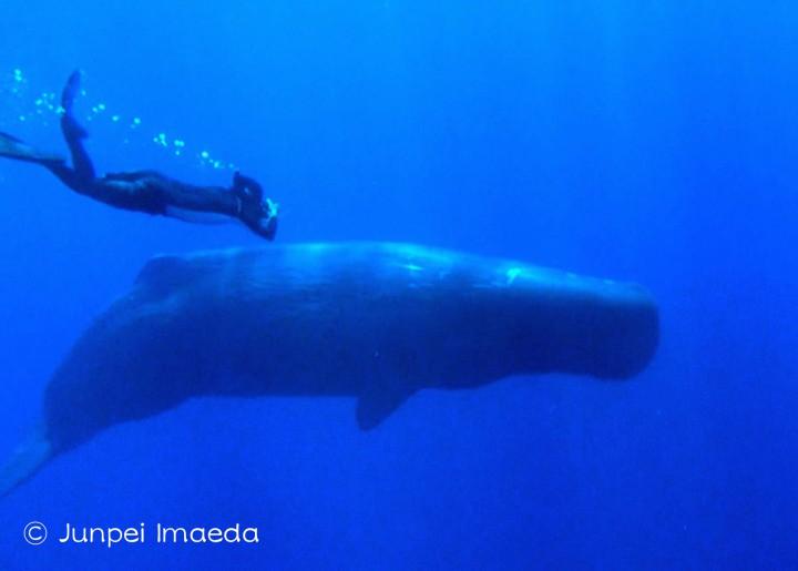 マッコウクジラの画像 p1_38